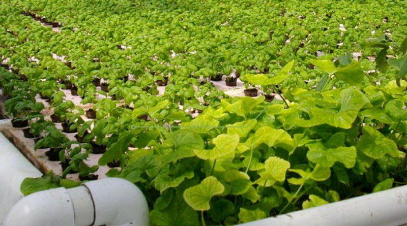 CUrso de Cultivo de Acuaponia