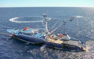 Establece SAGARPA veda de túnidos en el Océano Pacífico Oriental