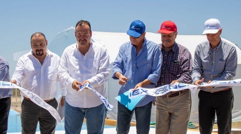 Inaugura Conapesca el primer centro de innovación e investigación para el mejoramiento genético del camarón, único a nivel nacional