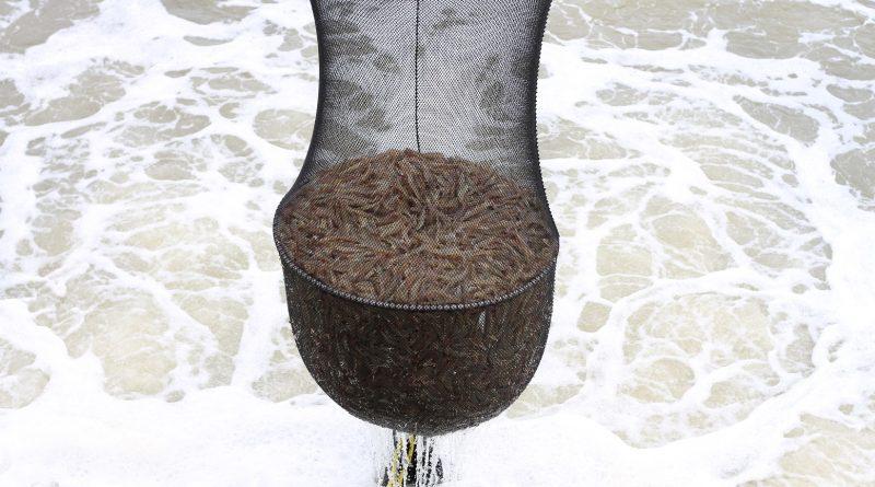 cosecha de camarón